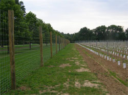 Stout deer fence around new vineyard in Pennsylvania. Photo by Mark Chien, Pennsylvania State University.